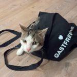 """Katze """"Minette"""" freut sich über die Gastfreund Tasche © Ruth Heßmann"""